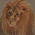 Thoughtful Lion 2 by Stephanie Grant