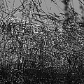 Thousands Of Shimmering Raindrops - Monochrome by Ulrich Kunst And Bettina Scheidulin