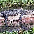 Thr Gator by Anthony Walker Sr