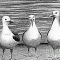 Three Amigos by Phyllis Howard