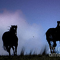 Three Amigos by Wildlife Fine Art