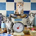 Three Baking Kittens by MGL Meiklejohn Graphics Licensing