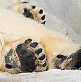 Three Bear Paws by Les Palenik