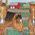 Three Beautiful Horses by Megan Cohen