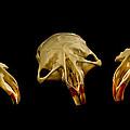 Three Blind Mice by Jean Noren