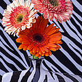 Three Daises In Striped Vase by Garry Gay