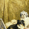Three Dogs by Charles van den Eycken