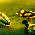 Three Ducks On Golden Pond by Amy Vangsgard