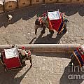 Three Elephants At Amber Fort by Inge Johnsson