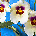 Three Exotic Orchids by Garry Gay