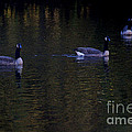 Three Geese On The Little River by Linda Shafer