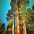 Three Giant Sequoias Digital by Barbara Snyder