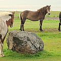 There Were Three Horsegirls And One Big Gray Stone  by Hilde Widerberg