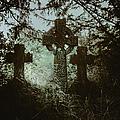 Three Gone by Margie Hurwich