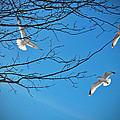 Three Gulls by Mikki Cucuzzo