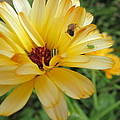 Three Insects And A Flower by Tina M Wenger