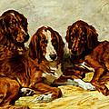 Three Irish Red Setters by John Emms