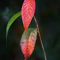 Three Leaves Of Fall by Brenda Bryant