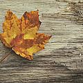 Three Leaves by Scott Norris