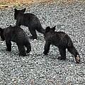 Three Little Bears In Step by Jan Dappen