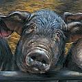 Three Little Piglets by Dina Perejogina