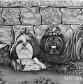 Three Little Shih Tzus by Lena Auxier