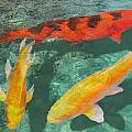 Three Mixed Koi by Elaine Plesser