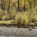 Three Moose Resting by Belinda Greb