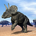 Three Nedoceratops In The Desert by Elena Duvernay