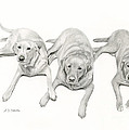 Three Of A Kind by Sarah Batalka