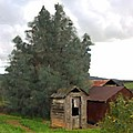 Three Old Sheds by Charlette Miller