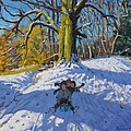 Three on a sledge Allestree Park Derby by Andrew Macara