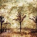Three Palms 6-2 by Skip Nall
