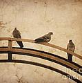 Three Pigeons Perched On A Metallic Arch. by Bernard Jaubert