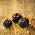 Three Plums Still Life by Michelle Calkins