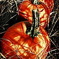Three Pumpkins by Chris Berry