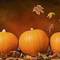Three Pumpkins by Amanda Elwell