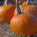 Three Pumpkins by Sharon Talson