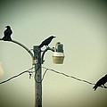 Three Raven Hoedown by Kathy Clark