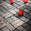 Three Red Leaves by Ellen Cotton