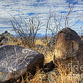 Three Rivers Petroglyphs 7 by Bob Christopher
