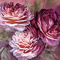 Three Roses Burgundy Greeting Card by Carol Cavalaris