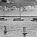 Three Sailboats by Patrick M Lynch