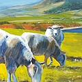 Three Sheep On A Devon Cliff Top by Mike Jory