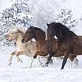 Three Snow Horses by Carol Walker