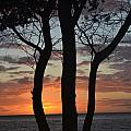 Three Trees At Sunset  by Evan Silver
