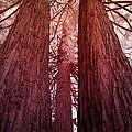 Three Trees by John Cardamone