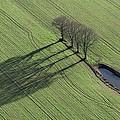 Three Trees, Montaigu by Laurent Salomon