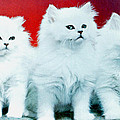 Three White Cats by Ted Denyer