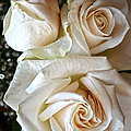 Three White Roses by Sandi OReilly